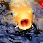 fish-1059268_1920